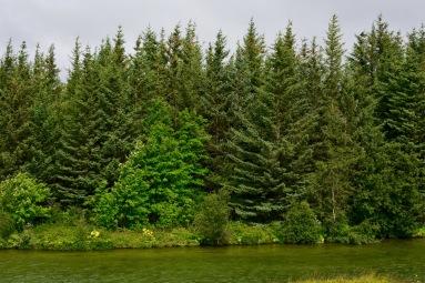 metsääkin on