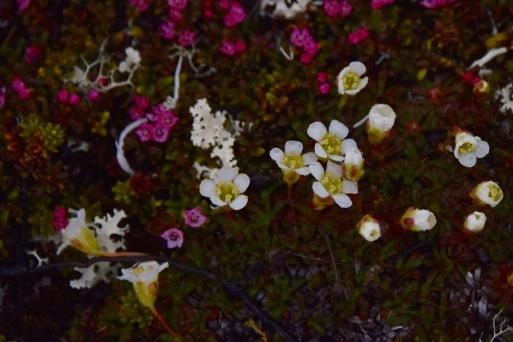 Vain uuvana ja sielikkö kukkivat