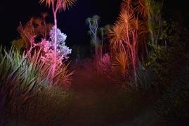 metsää punaisessa valossa, ei ärsytä eläimiä sanoi rangeri