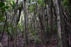 upeaa metsää