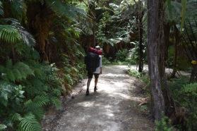 ihana metsä