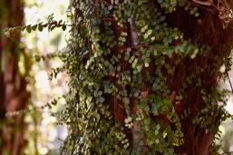 kasvustoa puiden päällä