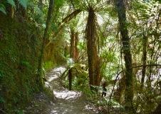 ihana kulkea metsässä