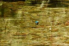 kunkku kalastaa