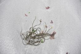 meren pohjasta irronnut